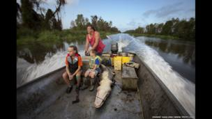 Alligator hunting, Lac des Allemands, Louisiana, USA