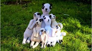 Seven meerkats munching