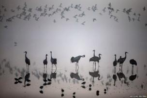A flock of migrating cranes is seen at the Hula Lake Ornithology and Nature Park in northern Israel.