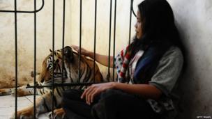 Abdullah Sholeh and Bengal tiger Mulan Jamilah behind his enclosure.