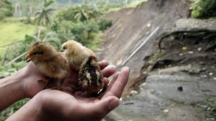Chicks rescued after landslides hit a village in the southern Philippine island.