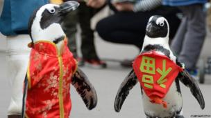 Penguins wearing a Chinese outfit