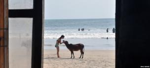 Woman and bull calf