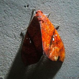Butterfly against a wall in Accra, Ghana