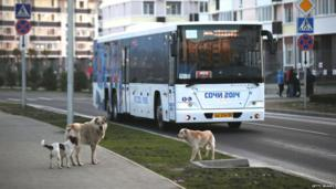 Stray dogs are pictured in front of an Olympic transport bus