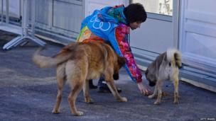 A volunteer feeds some stray dogs
