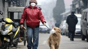 A man and his dog, both wearing masks, walk along a small alley on a hazy day in Beijing on 23 February 2014