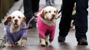 Dogs and their owners arrive to attend the second day of the Crufts dog show at the NEC in Birmingham, England