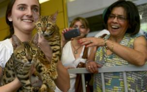 A woman presents Bengal cats