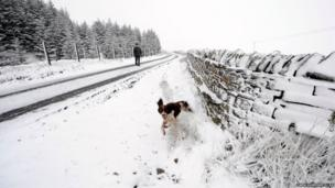 A spaniel plays in snow