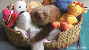 Sloth in a basket full of cuddly toys