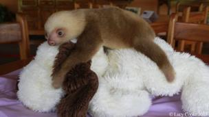 Sloth on a cuddly toy dog