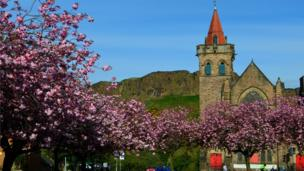 Cherry blossom at Kirk O'Field Parish Church in Edinburgh