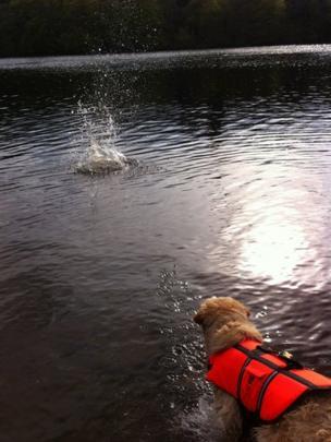 Dog at Loch Faskally