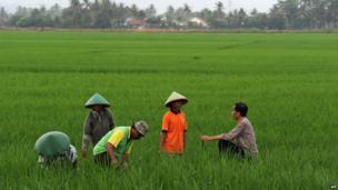 Indonesian frontrunner presidential candidate, Jakarta Governor Joko Widodo (right) speaks to rice farmers as he campaigns in Gentasari village in Cilacap, central Java island on 13 June 2014