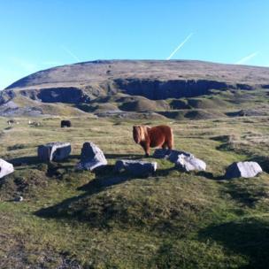 Pony on the Black Mountains
