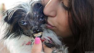 """Holly Chandler kisses Peanut, a mutt who is suspected of being a Chihuahua-Shitzu mix, at The World""""s Ugliest Dog Competition in Petaluma"""