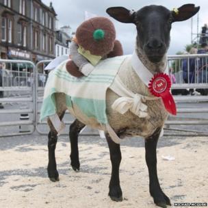 Sheep races