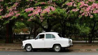 An Ambassador car stands parked under a blossoming tree in Bangalore (30 May 2014)