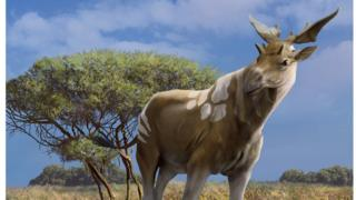 The large relative of the giraffe lived one million years ago