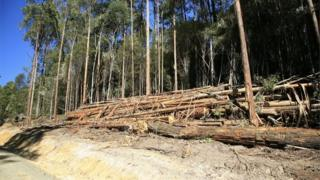 Logging in Tasmania