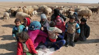 Internally displaced Syrians who fled Raqqa city rest near sheep in northern Raqqa province (6 February 2017)