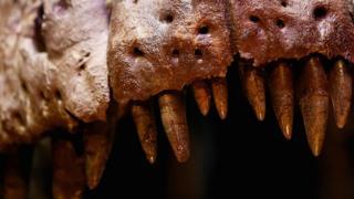 دندان دایناسور