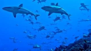 sharks in the channel