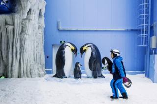 A snowboarder passes penguins