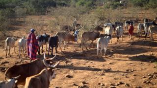 Un berger conduisant ses bêtes aux pâturages au Kenya (illustration)