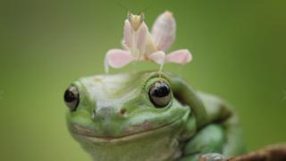 Wildlife photograph of a frog by Muhammad Roem
