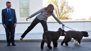 First lady Michelle Obama is pulled away by her dogs Bo and Sunny (photo from November 2015)