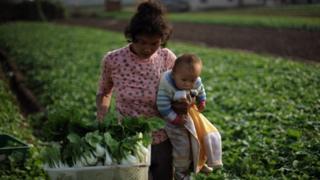 Madre con su bebé en una plantación de pak choi en China