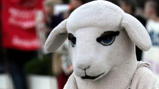 An animal rights activist dressed in a sheep costume