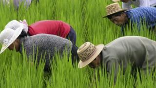 Trabajadores norcoreanos en el campo