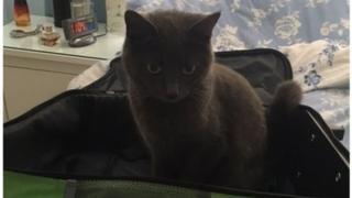 кошка Фло