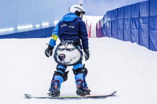 A snowboarder with a wolf on his outfit