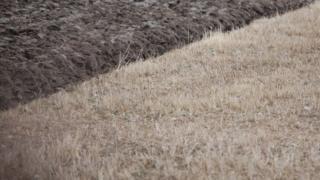 Field in Merseyside, UK (Image: BBC)