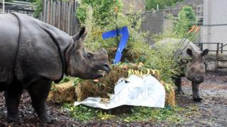 E Rhino Productions Resident rhinos enjoy ...