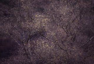 Left - by Lee Acaster