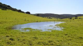 Ephemeral wetland (Image: Tatenda Dalu)