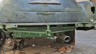 A cat sits under a car in Old Havana, Cuba