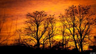 Trees are silhouetted against an amber sunset