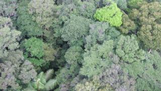 Rainforest canopy, Amazon (Image: Kyle Dexter)