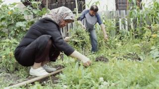 Беженцы сажают овощи