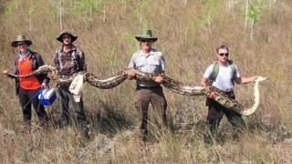 people holding giant python