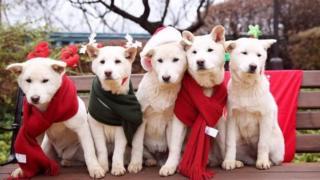 朴槿惠搬出青瓦台誰來照顧被遺棄的狗?