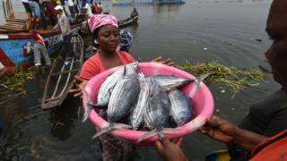 Fishers landing tuna catch, Ivory Coast (Image: FAO/Sia Kambou)