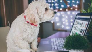 Cachorro sentado em frente a tela de laptop