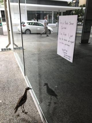 A sign explaining to passers-by that the bird enjoys staring at its reflection